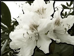 blomma-300x225